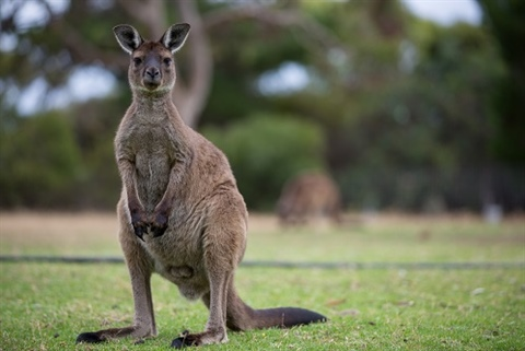 Roos-at-Sues-6.jpg